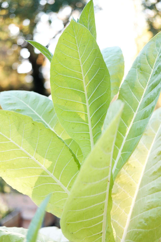 PlantAge_Garten_08.jpg