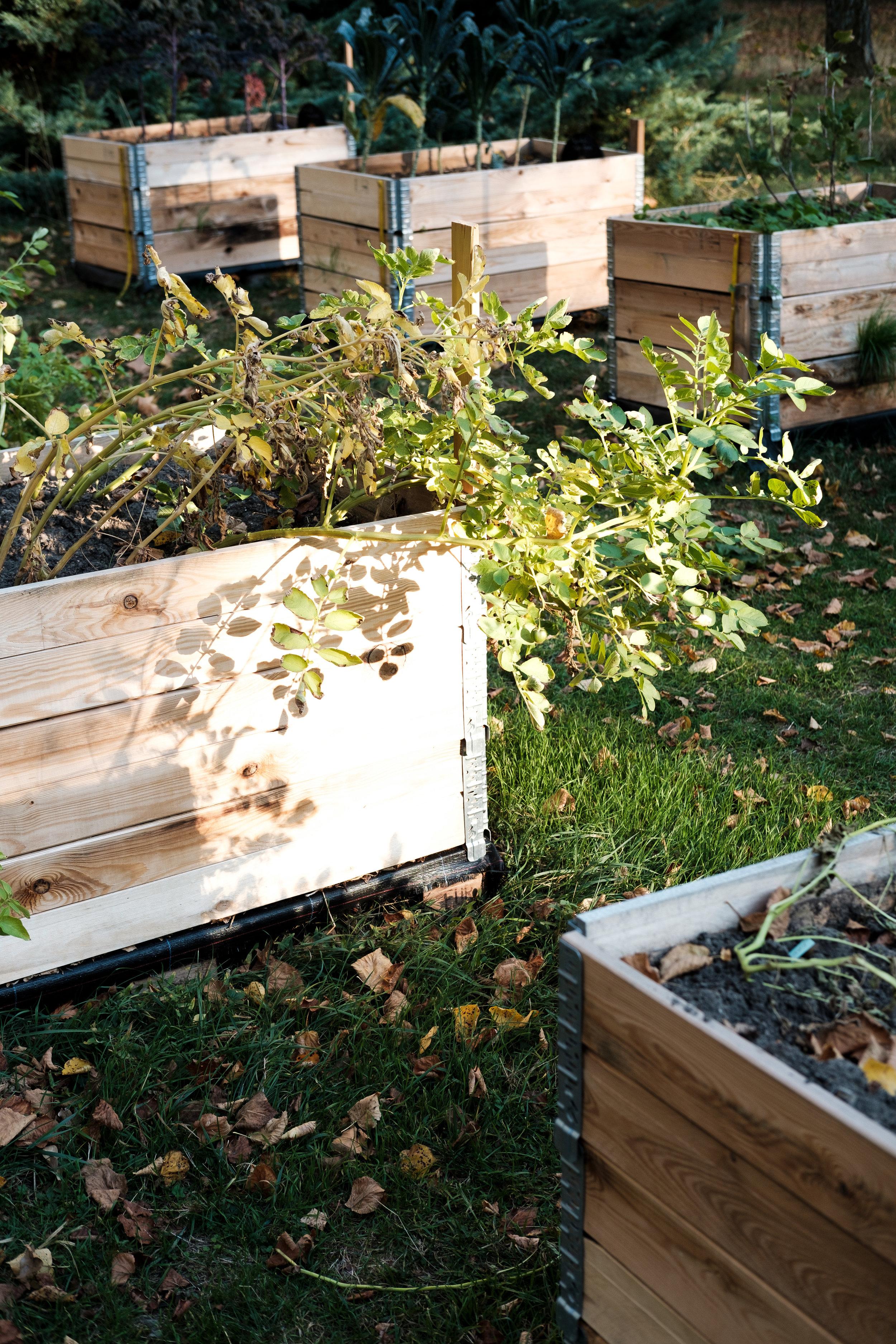 PlantAge_Garten_25.jpg