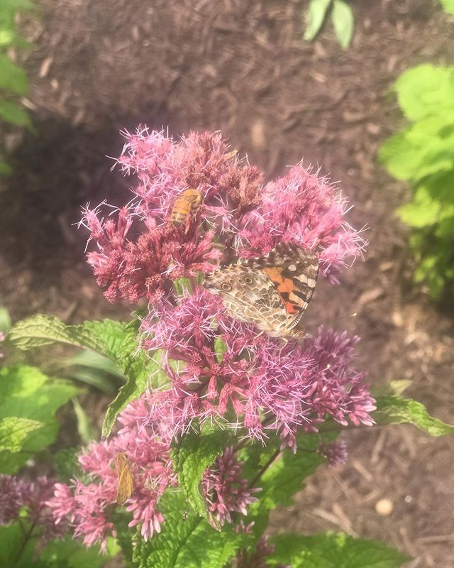 I spy with my little eye 👁... 🐝 & 🦋  Do you ever crave connection with the outdoors? I need to put my bare feet on the earth daily. ☺️ #bees #flowers #butterfly