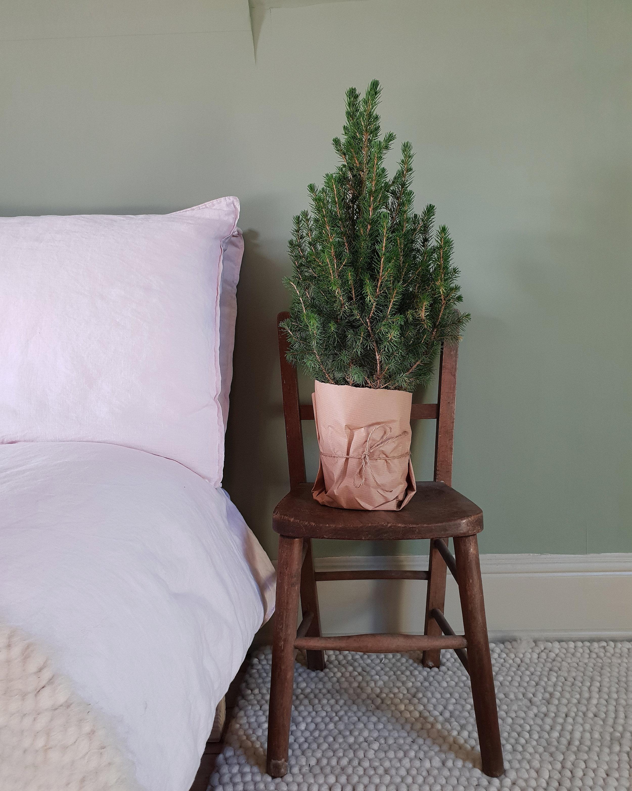 small Xmas tree my bed.jpg