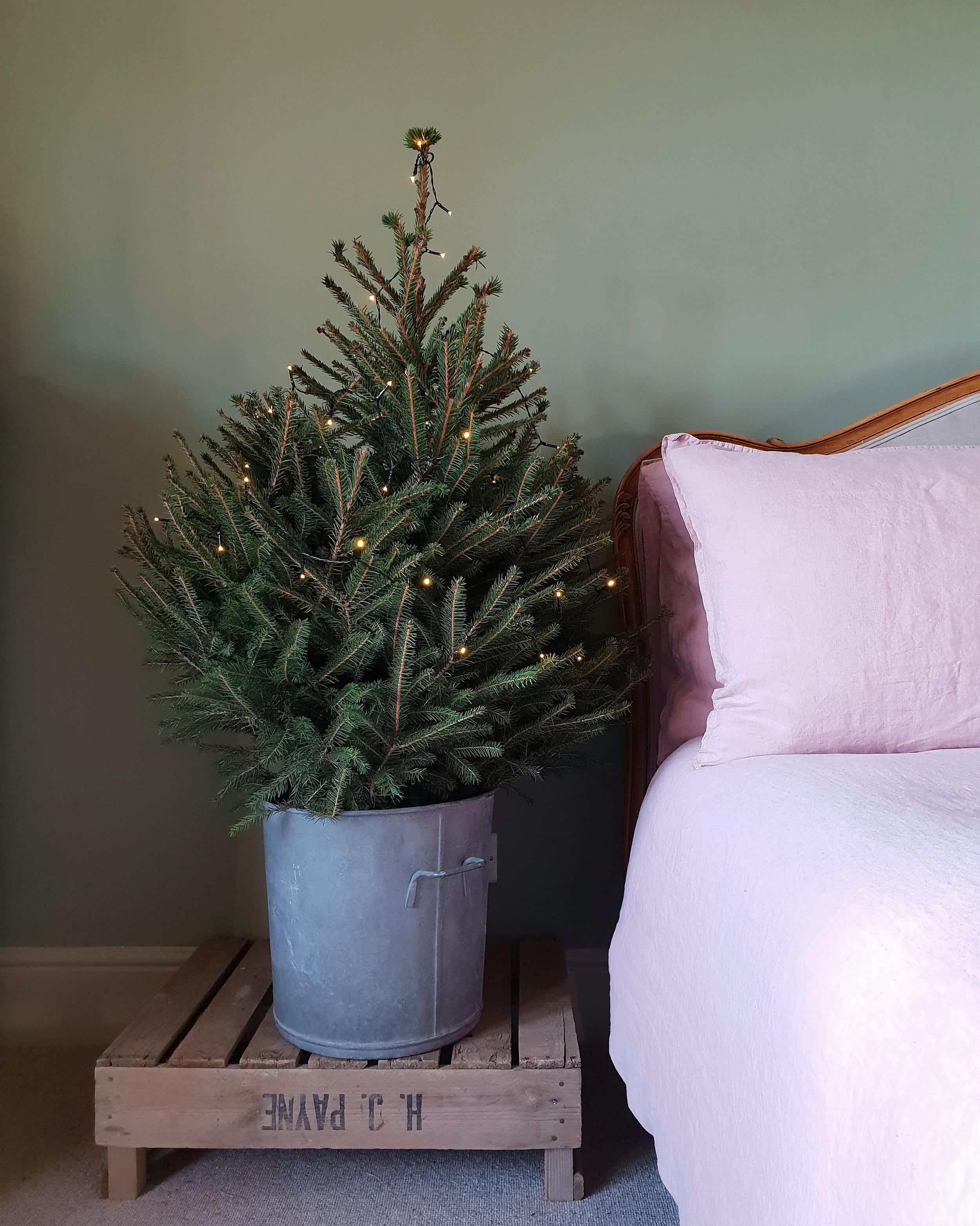 Xmas tree big bed.jpg