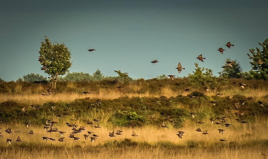 Fotografie: Erik Meijerink,  www.mooielandschappen.nl