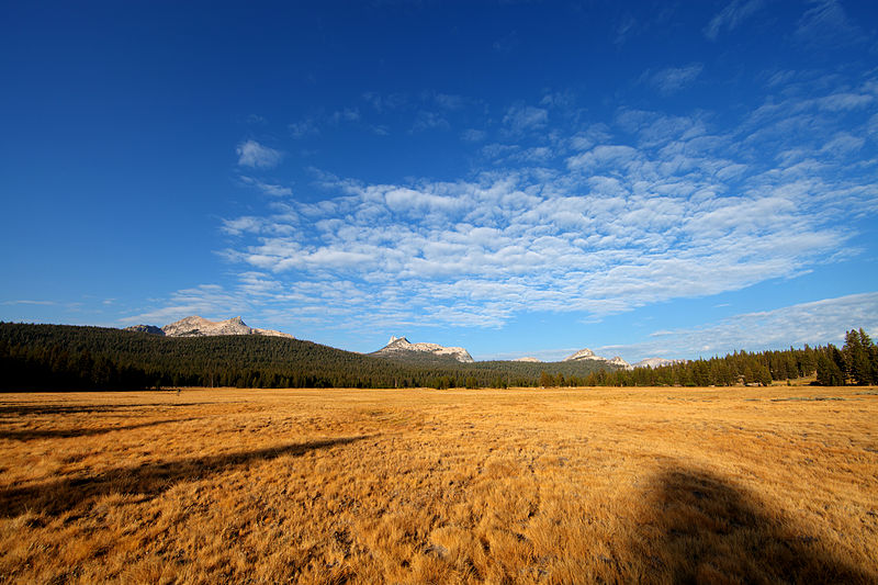 Almonroth-800px-Tuolumne_Meadows_hdr.jpg