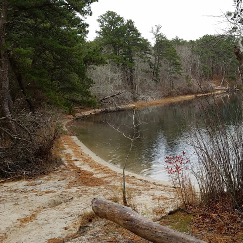 Freshwater Pond Maintenance - $20,000 raised for critical improvements to maintain the health of freshwater ponds in Wellfleet, Truro & Provincetown including improved access