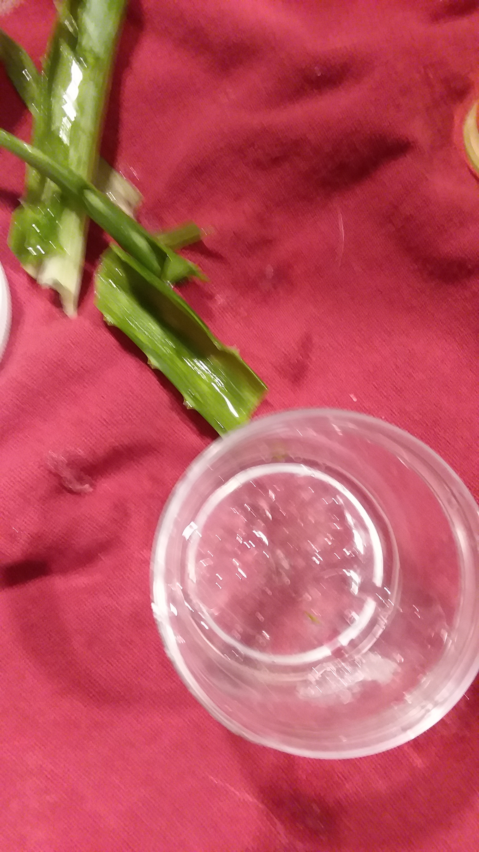 I eviscerated the aloe stalk and put the clear gel in a container. The aloe is clear and quite jello-ish