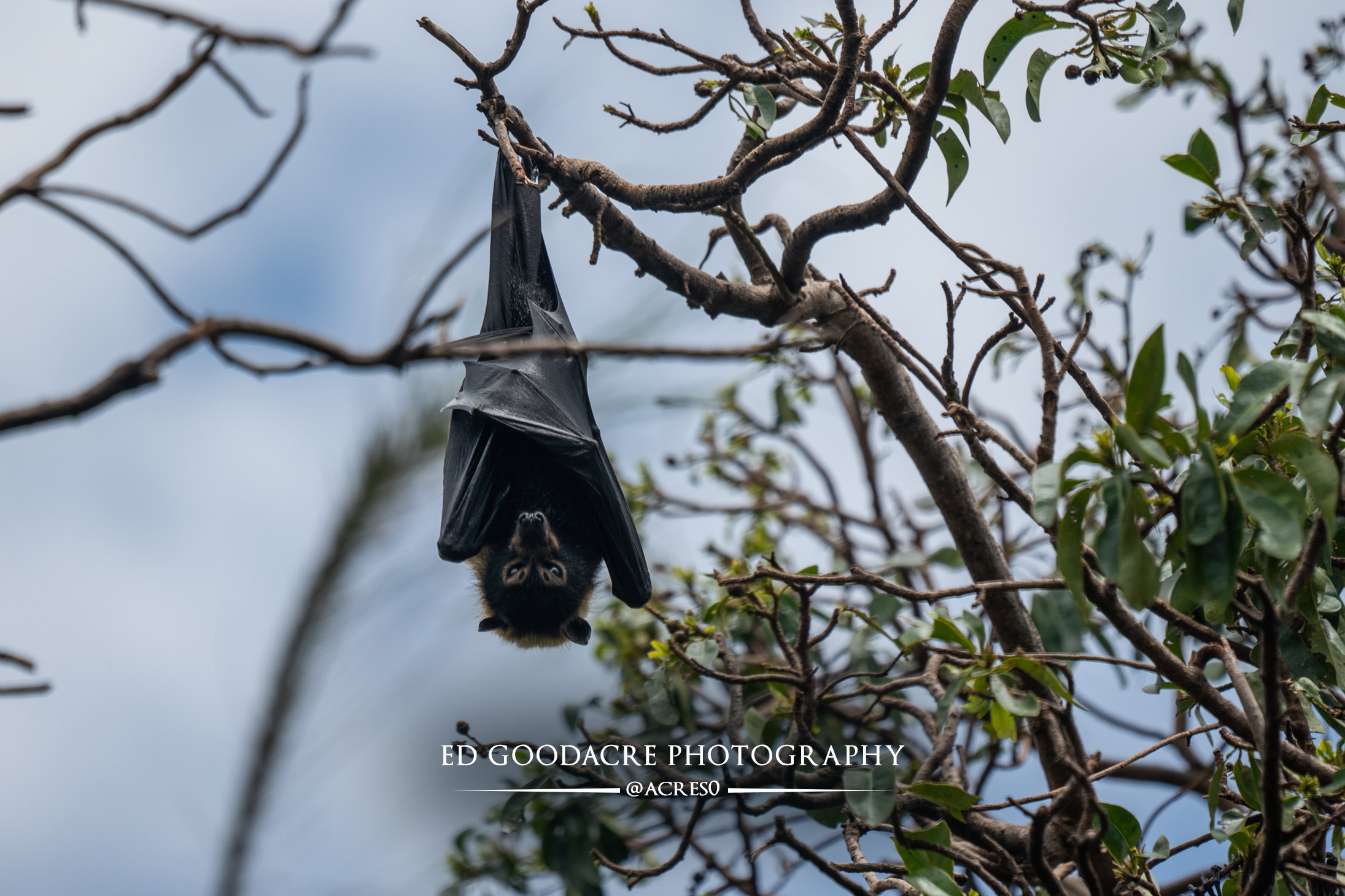 Bat-EG-website-2.jpg