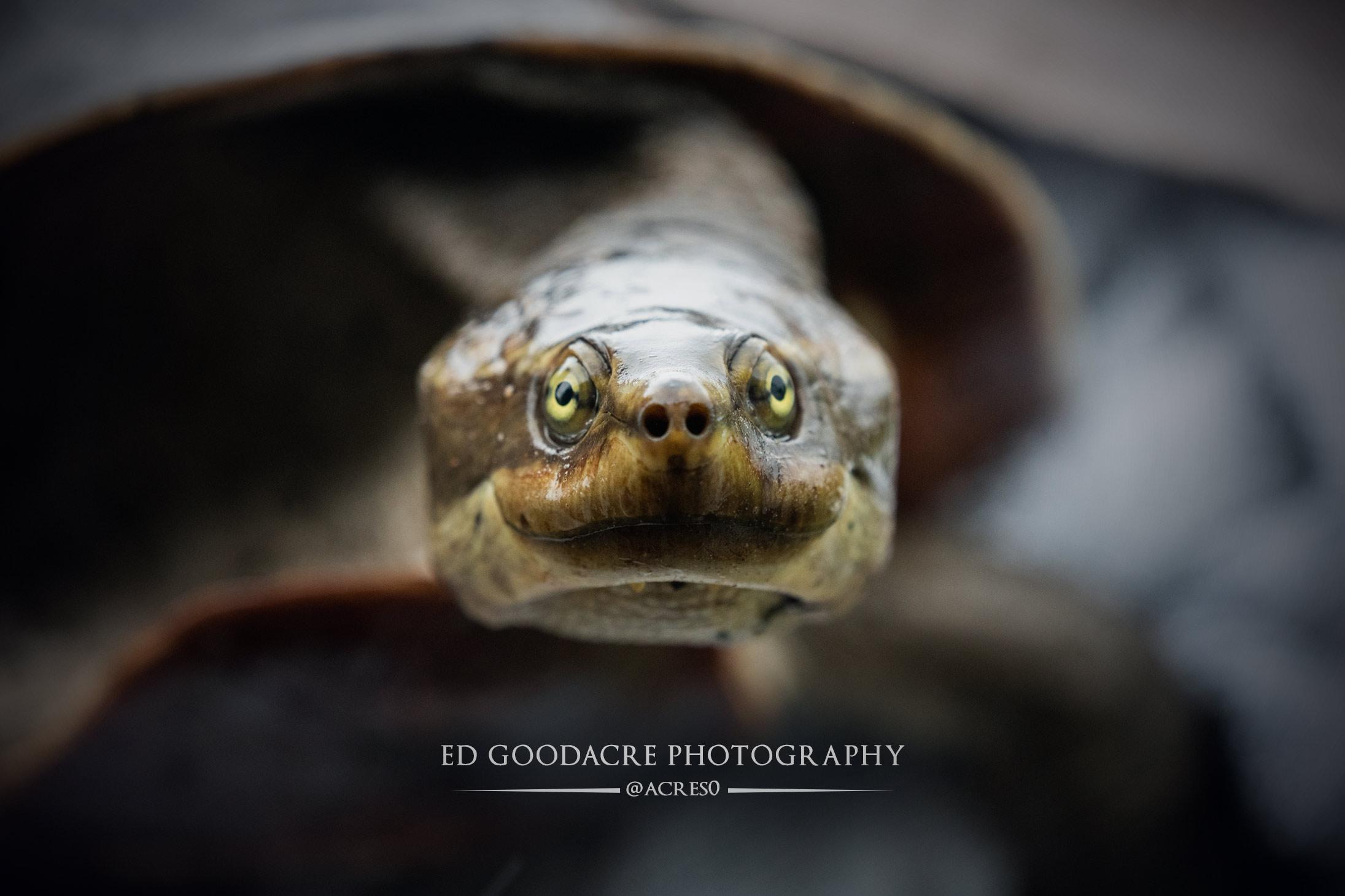 Turtle-EG-website.jpg