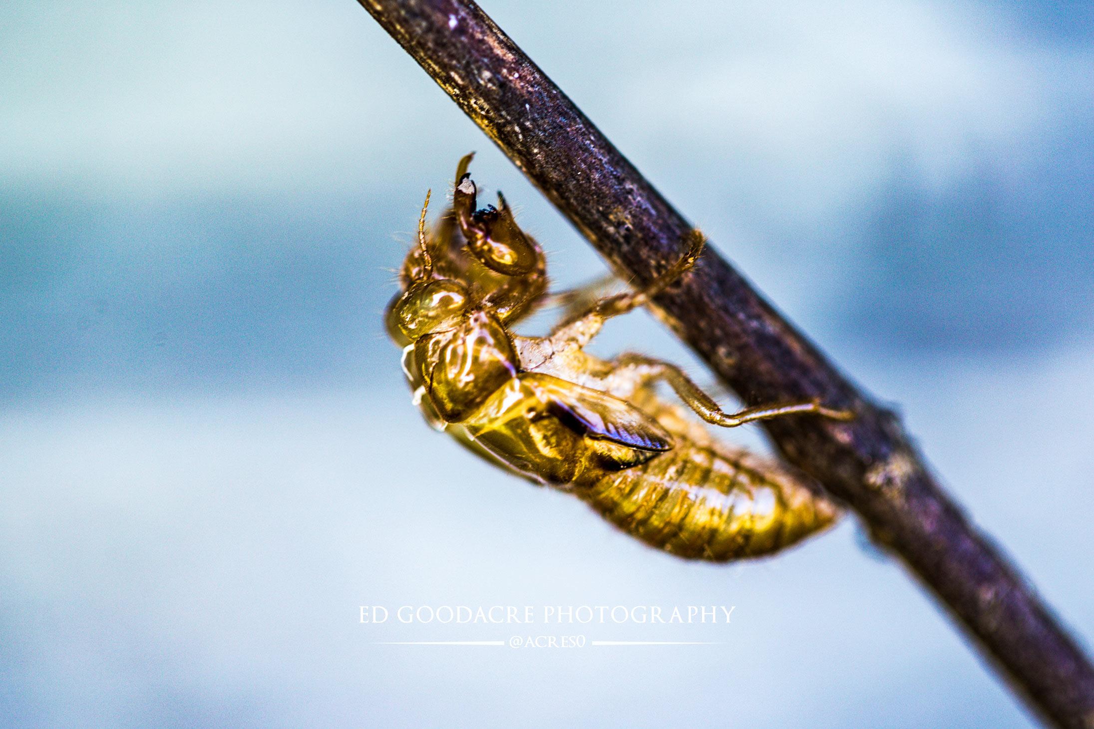 Macro-cicada-1.jpg