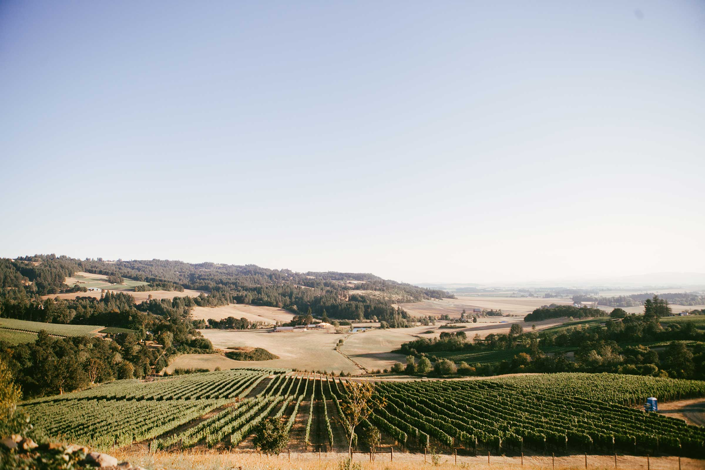 lower-vineyards.jpg