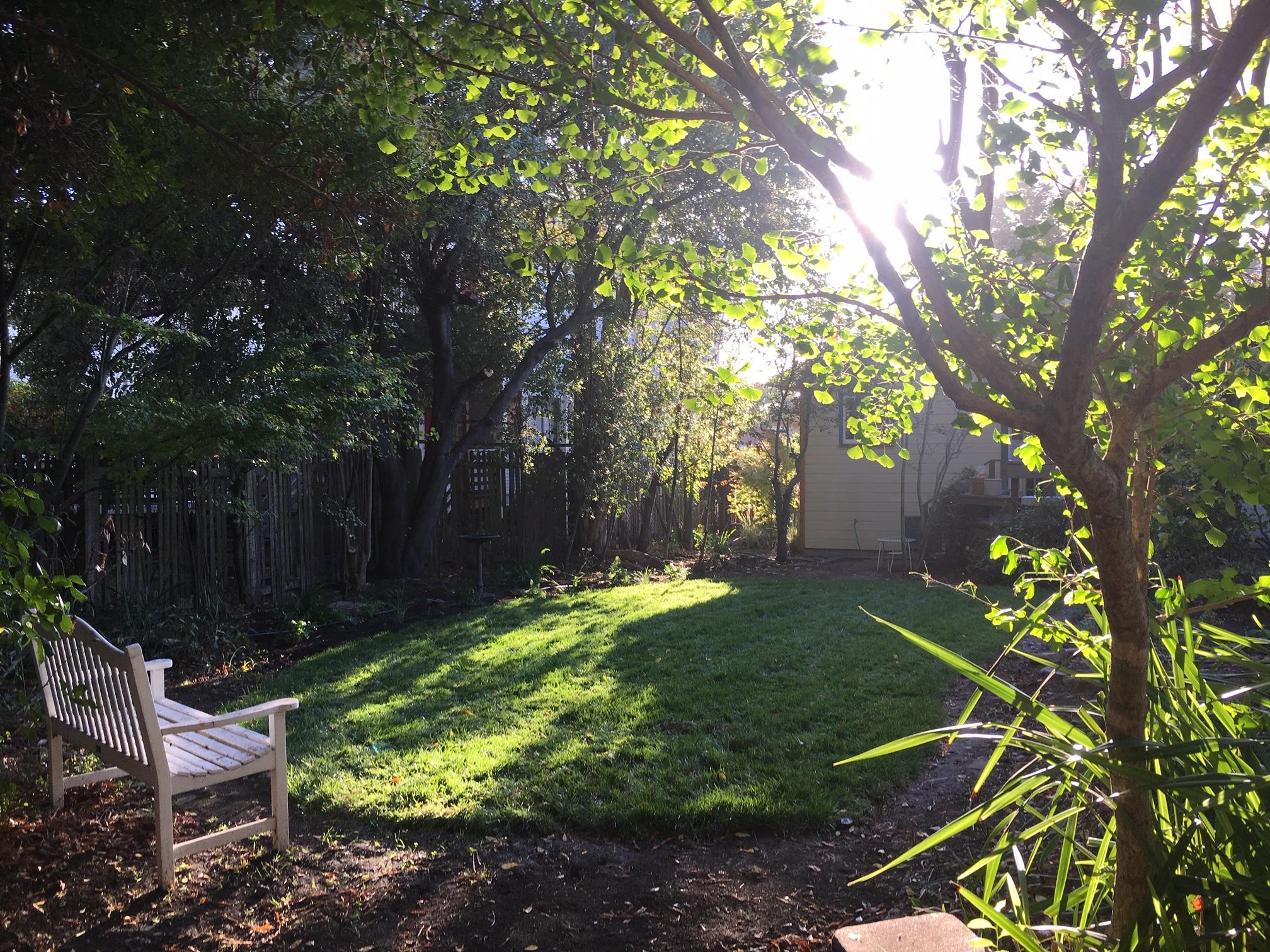 backyardfromshed.jpeg