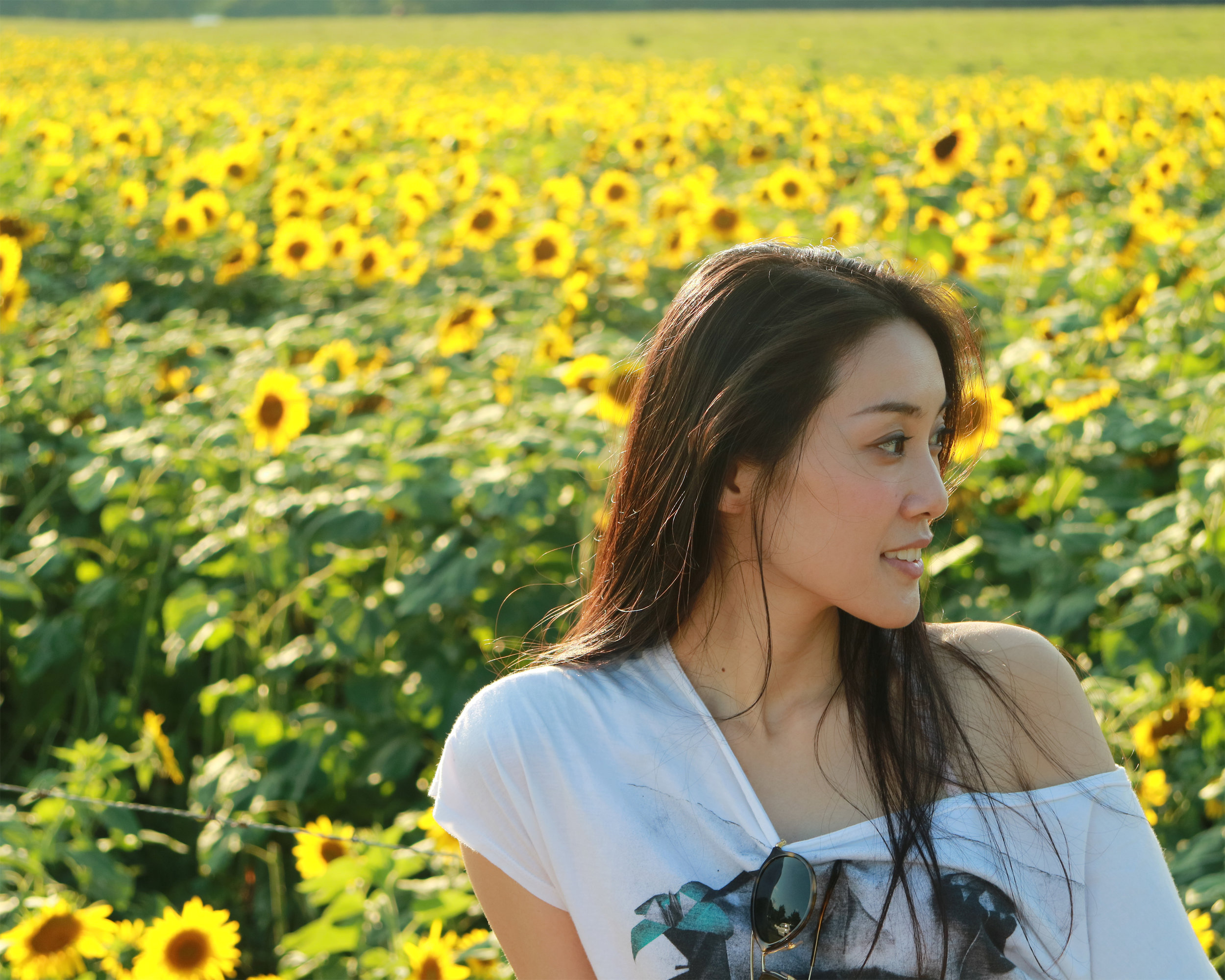 sunflower-8x10.jpg