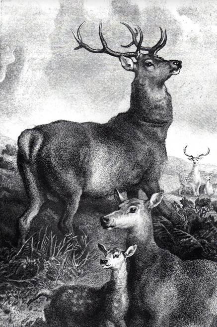 deer parks.jpg