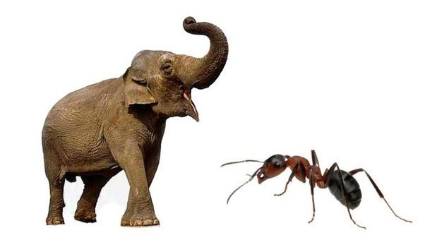 elephant-and-bull-ant.jpg