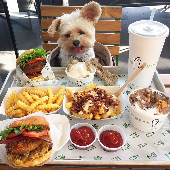 rescue-dog-restaurants-food-instagram-popeyethefoodie-17-581057ebc5312__700