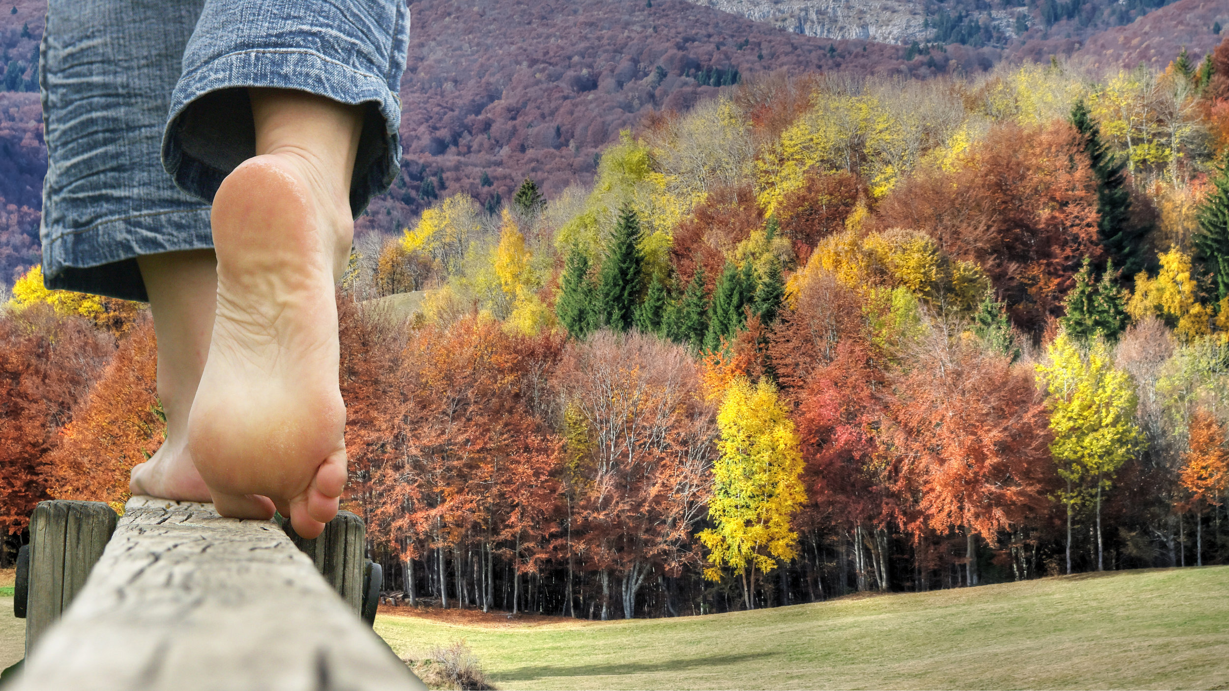 Voyage into the heart of Cévennes, forest bathing (by Semelles au vent)