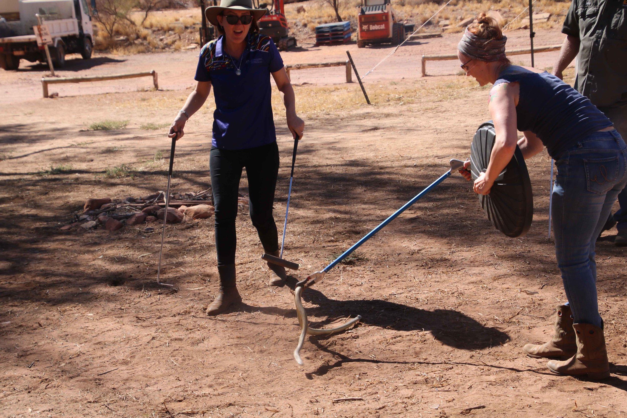 snake catching.jpg