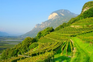 Friuli wijngebied.jpeg