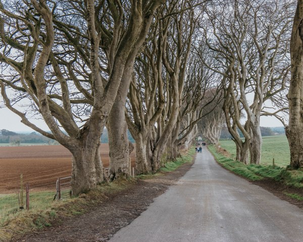 dark hedgesgame of thrones.jpg