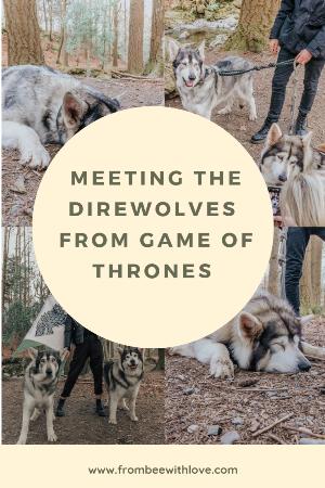 direwolves game of thrones1.jpg.png