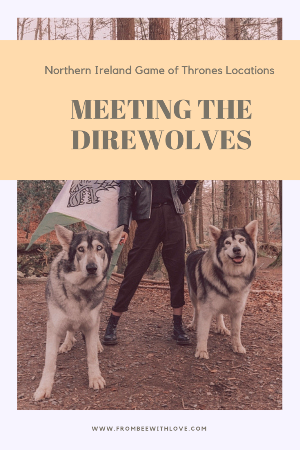 direwolves ireland 1.jpg.png