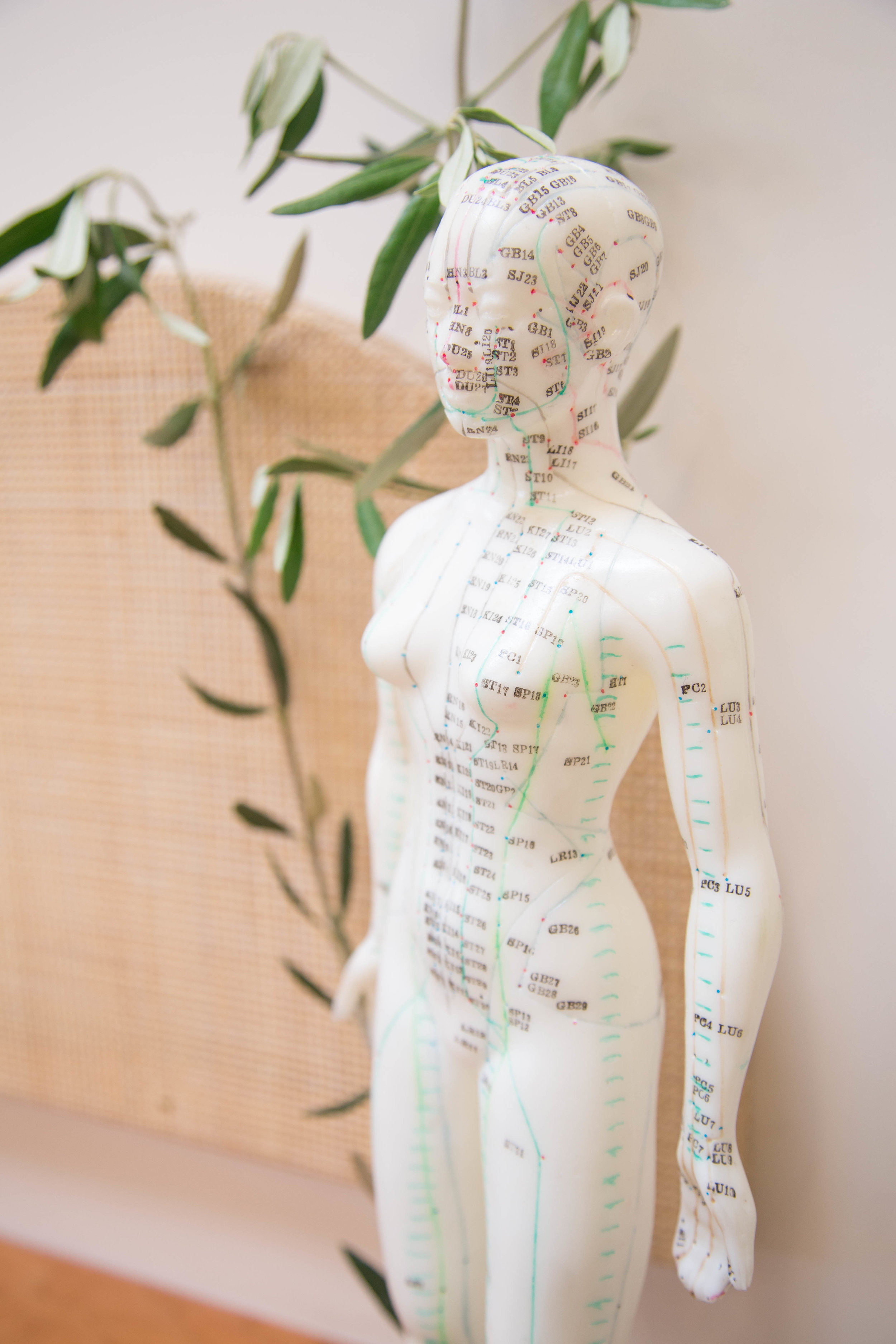 Suggested Readings — Spirit Gate Acupuncture & Wellness