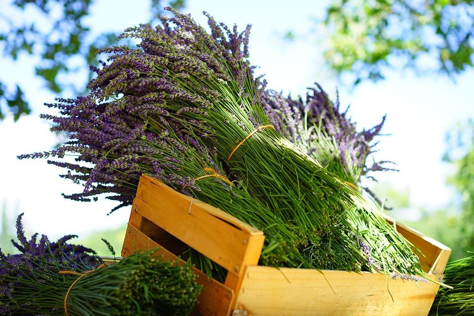 lavender-1595605_960_720.jpg