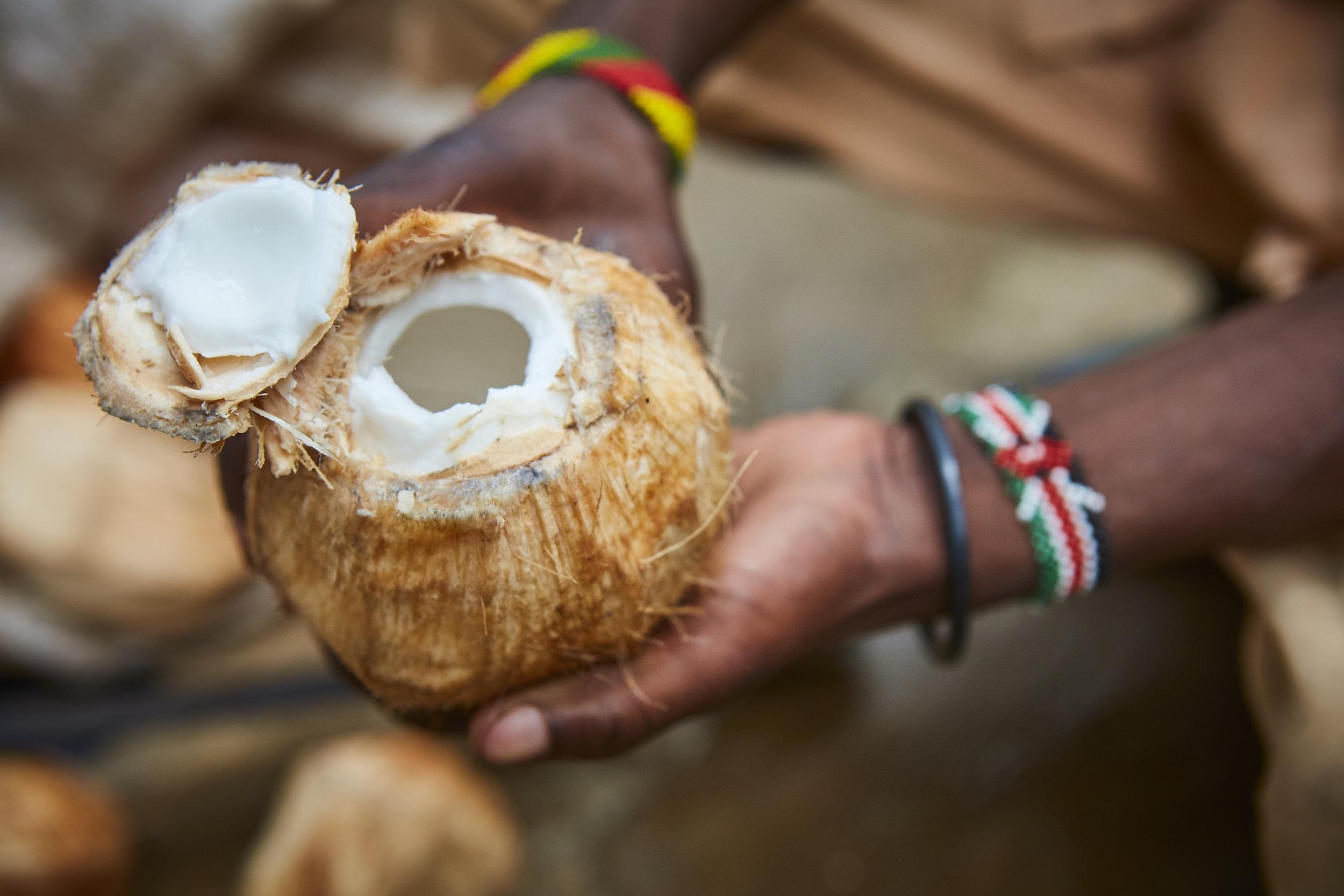 Coconut_010.jpg
