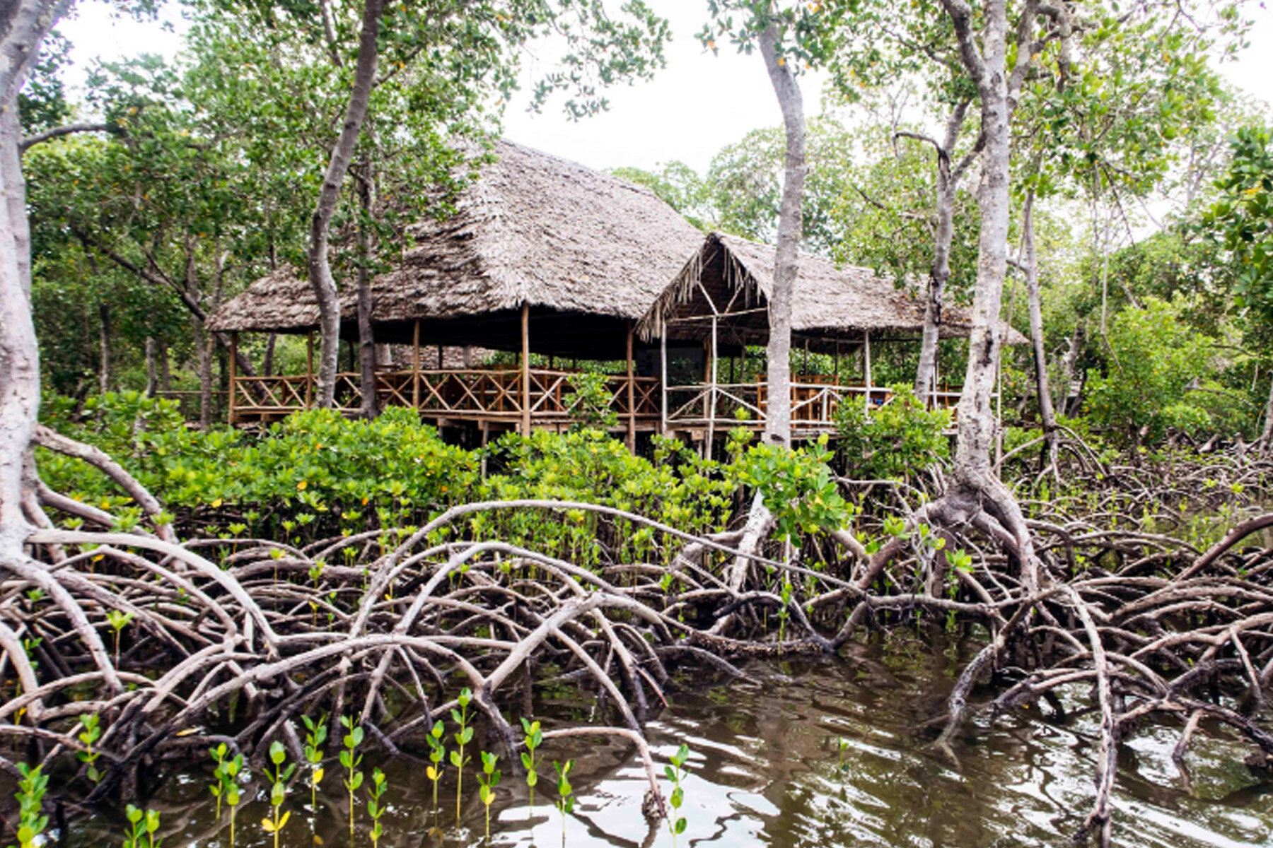 Crab Shack, majestically built amongst the mangroves..
