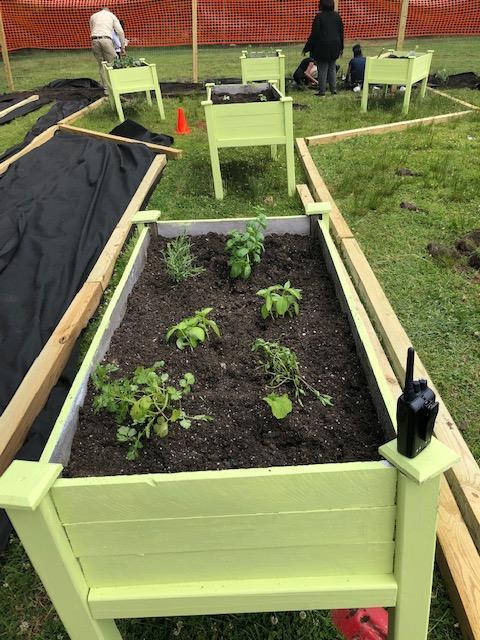 Garden.6.6.2019.4.png
