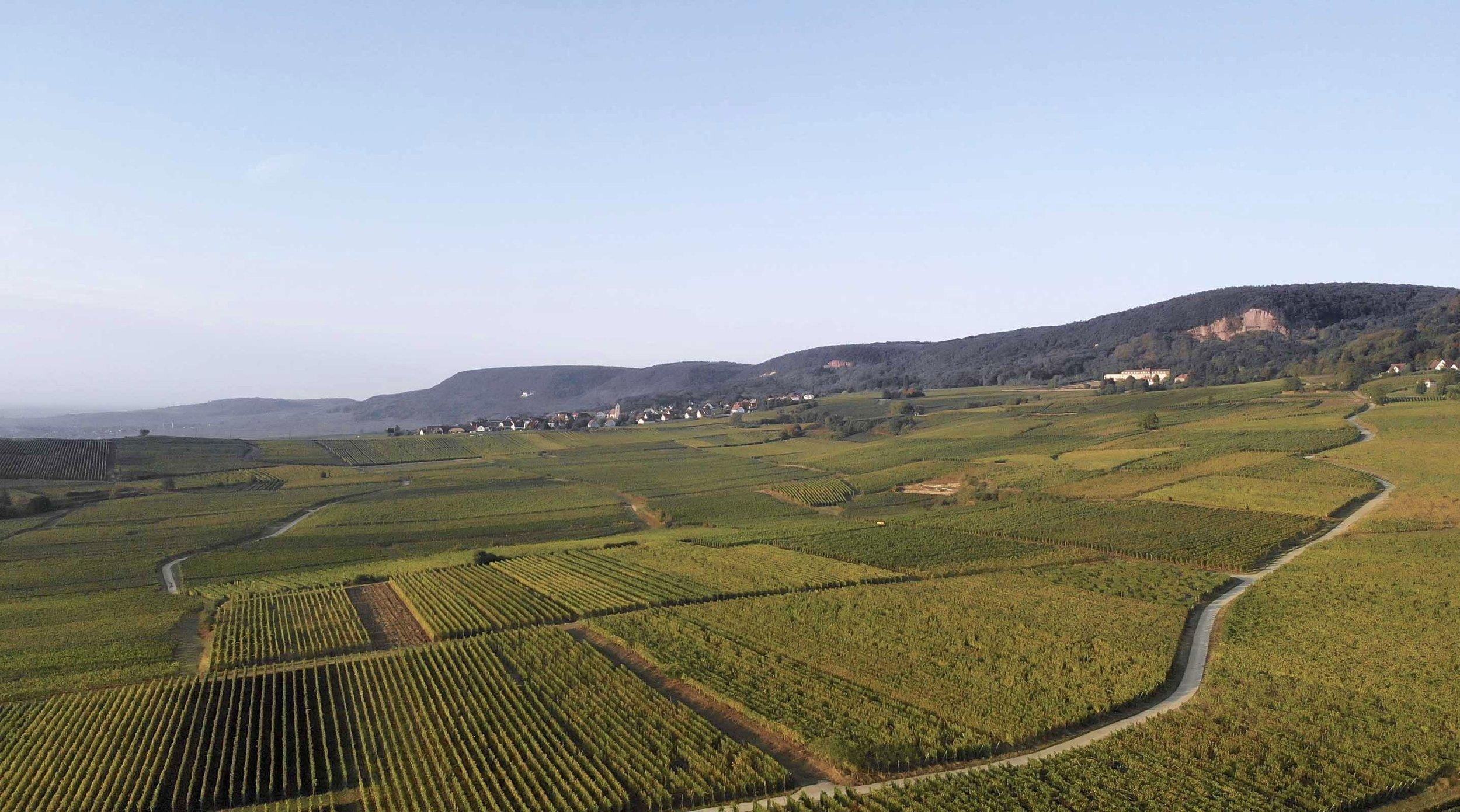 Vins d'Alsace, Domaine clément Leiber, Cave à vins, Vigneron-récoltant Grands vins d'Alsace, AOC Alsace grand cru, Vins en Alsace, le cépage alsacien, appellation Alsace grand cru, raisins, riesling, muscat, pinot gris, gewurztraminer, Gewutztaminer vendanges tardives, vendange tardive, vins de terroir alsacien, vins haut de gamme, Alsace grands crus, vins d'Alsace, Obermorschwihr, Colmar, Pfersigberg, Eichberg, cave vinicole, cave viticole, Vigneron-récoltant, Artisan vigneron, Serge Leiber, Centon d'Alsace, Pinot Blanc, Muscat d'Alsace, Rosé d'Alsace, Pinot Noir, Crémant d'Alsace, Crémant d'Alsace Rosé, Crémant d'Alsace Brut Impérial MAGNUM, Riesling Terre Jaune, Pinot Gris, Grand Cru Pfersigberg, Gewurztraminer Grand Cru Eichberg, Pinot Gris 2015 Barrique des Perles, Gewurztraminer 2015 Lune Rouge, Eaux-de-Vie, Quetsch d'Alsace, Marc de Gewurztraminer, Kirsch, Mirabelle, Poire William, Framboise, oenotourisme, Domaine viticole, domaine vinicole, Caves de Voegtlingshoffen, Cave à vins Eguisheim, Dégustation de vins alsacien, Dégustation et vente de vins alsaciens, Caves de Herrlisheim, Caves de Husseren-Les-Châteaux, Caves de Gueberschwihr,