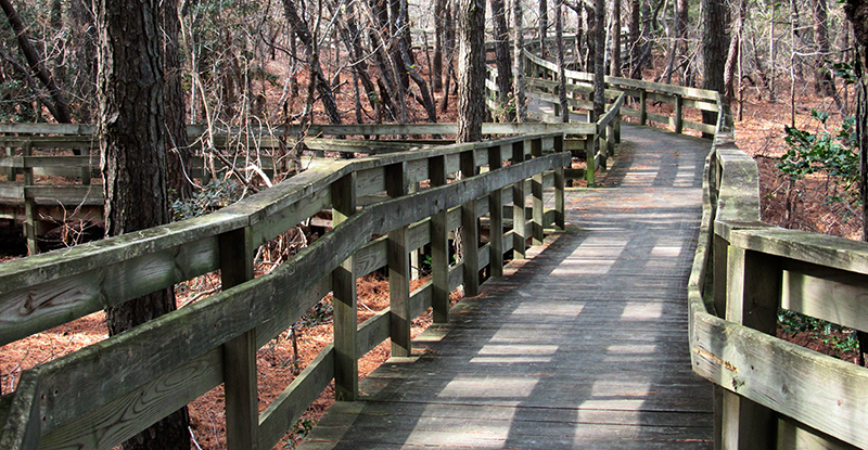 The boardwalk at Cape Charles Natural Area Preserve.