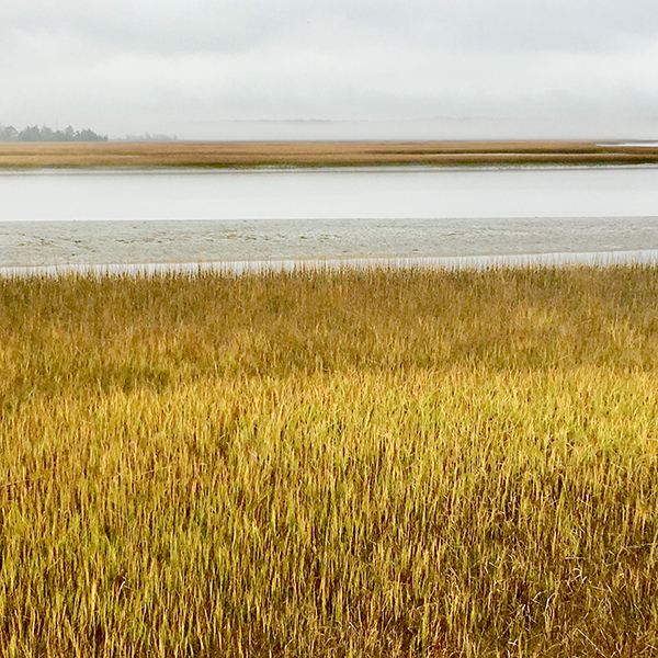 WILLIS WHARF OVERLOOK - In Brief: Interpretive saltmarsh overlook renowned for sizable Marbled Godwit roost (August to April) at higher/rising tide. Excellent spot for scoping distant shorebirds, with lesser numbers of waterfowl, terns, gulls, and occasional loons and grebes.Access: Open daily, dawn to dusk (not gated; earlier and later also legal). Port-a-johns available at boat launch and overlook platform.