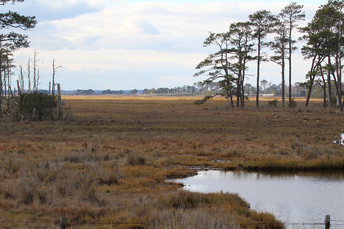 chincoteague national wildlife refuge - This 13,682-acre refuge is known worldwide for providing pasture rights to 150 semi-feral horses.