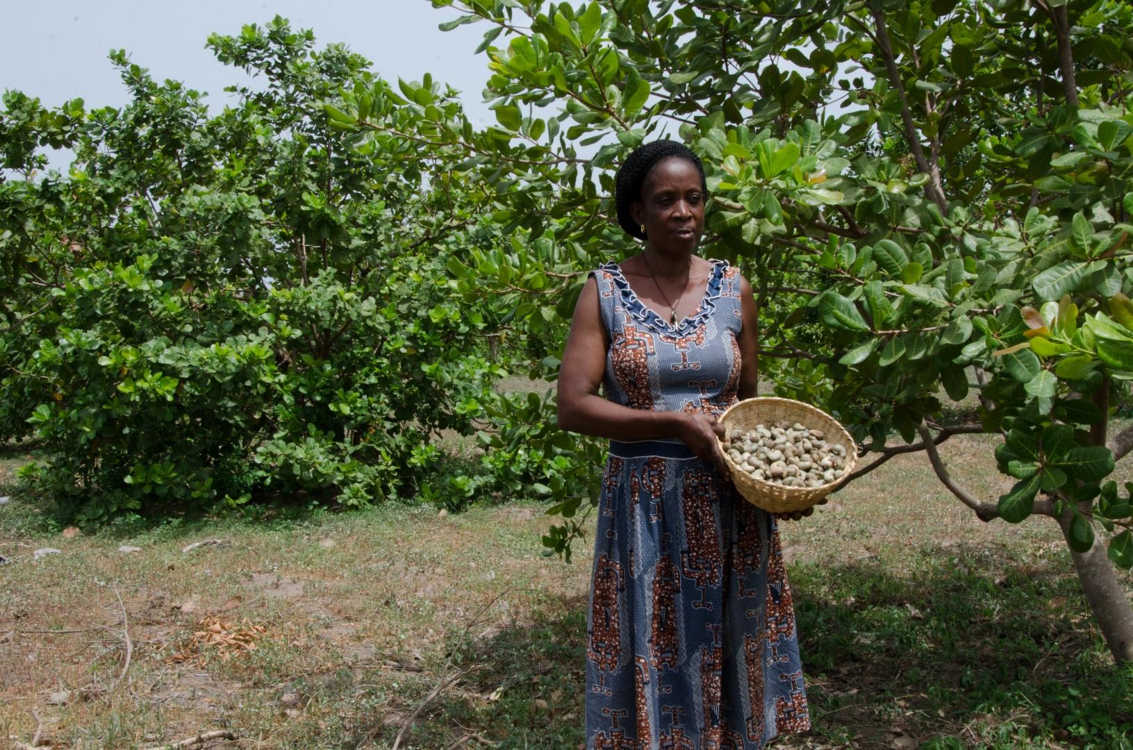 cashew plantation Manager.jpg