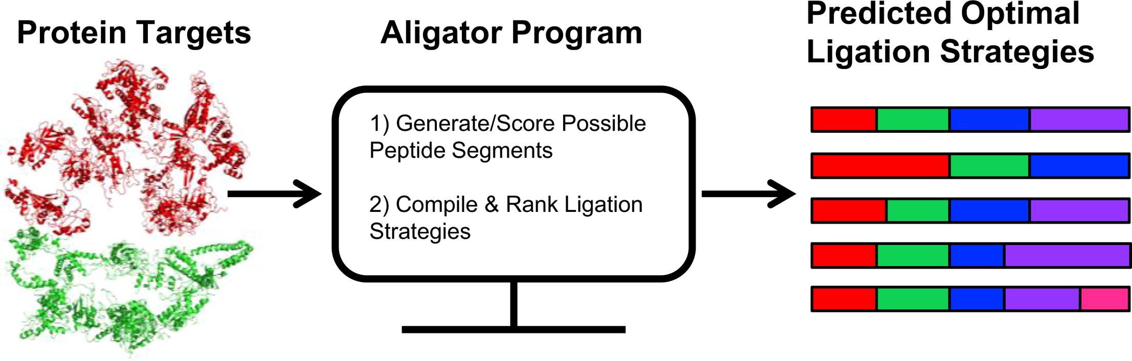 Aligator-graphical-abstract_Jacobsen-2017.jpg