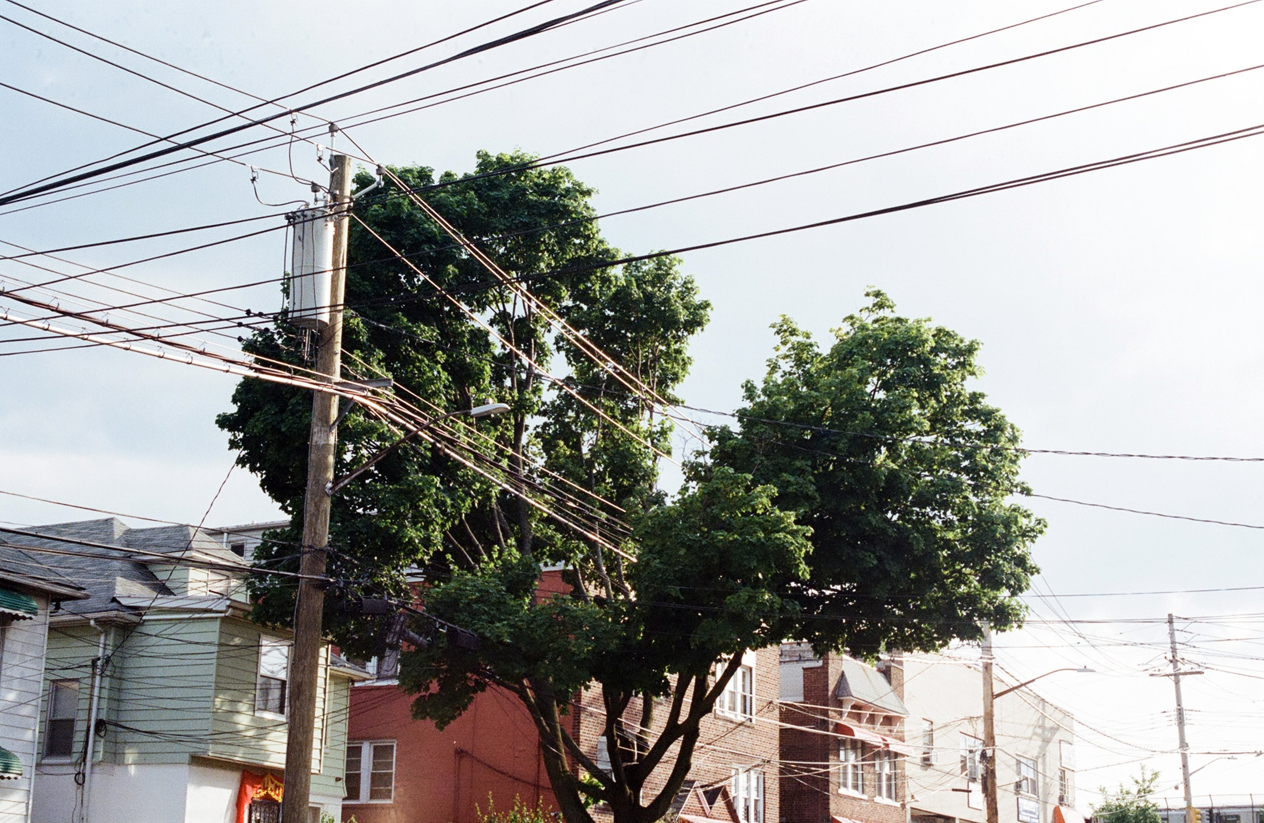 Tree and cables, Bronx