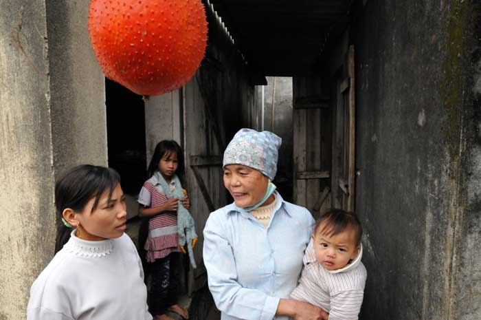 In the Red River region of Northern Vietnam, a family chats among themselves answering questions posed by Joe through his translator. In the upper foreground a brilliant red-orange fruit of the Gac fruit,  Momordica cochichinensis  hangs ready for harvest. The Gac fruit was a primary source of Vitamin A for millions of children in South East Asia. The transformation of cultures has resulted in it being less used meaning that children are now missing out on its great nutrients.