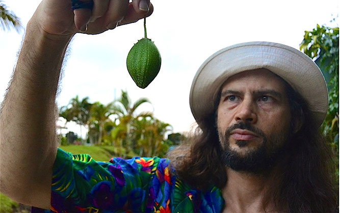 """Patrick holds up an example of the Tacaco,  Sechium tacaco . This fruit is endemic to Costa Rica, possibly spilling over into Panama. Closely related to the Chayote,  Sechium edule , It is much much smaller in size. The mature still tender fruits are harvested in boiled for about 10-15 minutes and then eaten with salt. The flavor is spectacular, quite rich and """"buttery and nutty"""". This plant has been ignored more and more in recent times, but is nevertheless a magnificent vegetable that needs to be grown and promoted."""