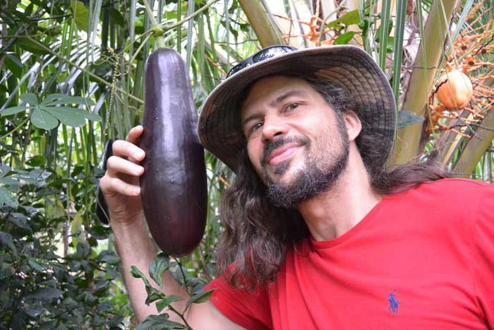 """Here Patrick shows off a """"dark chocolaty black"""" fruit of  Sicana odorifera , the so called """"Casabanana"""". This unusual landrace was discovered in the province of Central Panama. We were a month or so too early so this fruit was not yet ripe. When they are ripe they are beautifully fragrant and can easily """"perfume"""" a large house. In many parts of Central and South America the fruits are used exactly for that reason. This vigorously vining plant should grow and produce well in almost any place with over 7 months of warm/mild weather. The plants surprisingly can take a small amount of frosts without harm."""