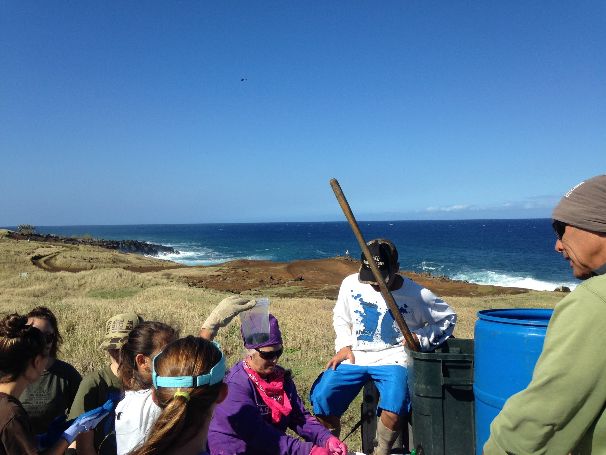 Volunteering time and materials to help with a restoration project to reduce erosion into the ocean by re-establishing native plants