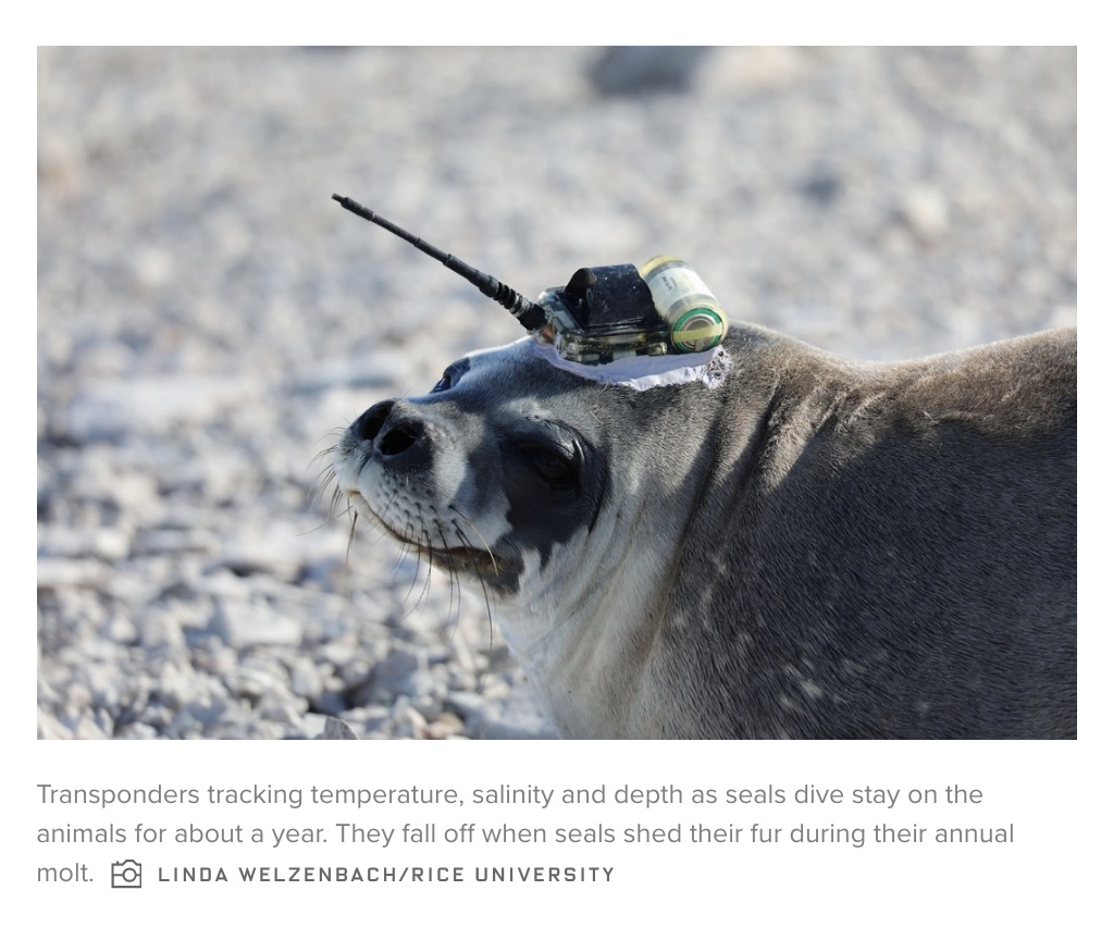 seal pic wired.jpeg