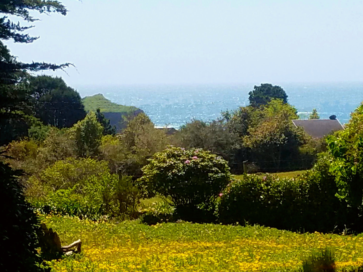 A view of the Pacific Ocean from the Pinewood room