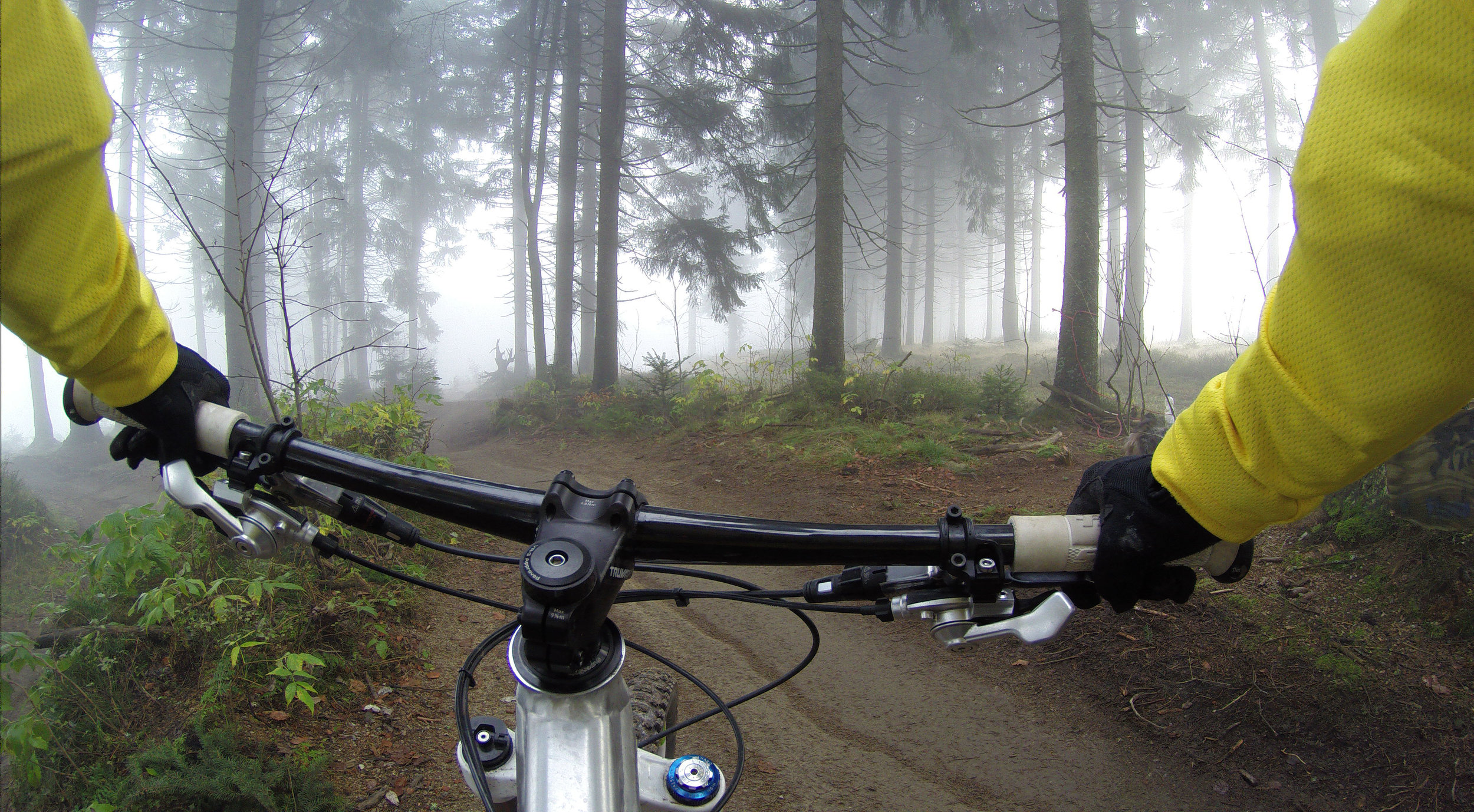 Biking through the Mendocino woods