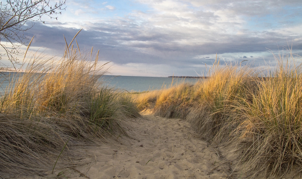a path through beach grass with the ocean in the background