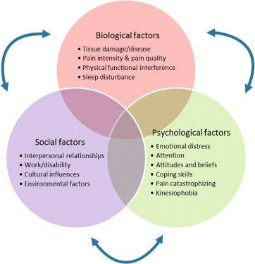 https://www.lewespainclinic.co.uk/single-post/2018/11/12/Biopsychosocial-Health