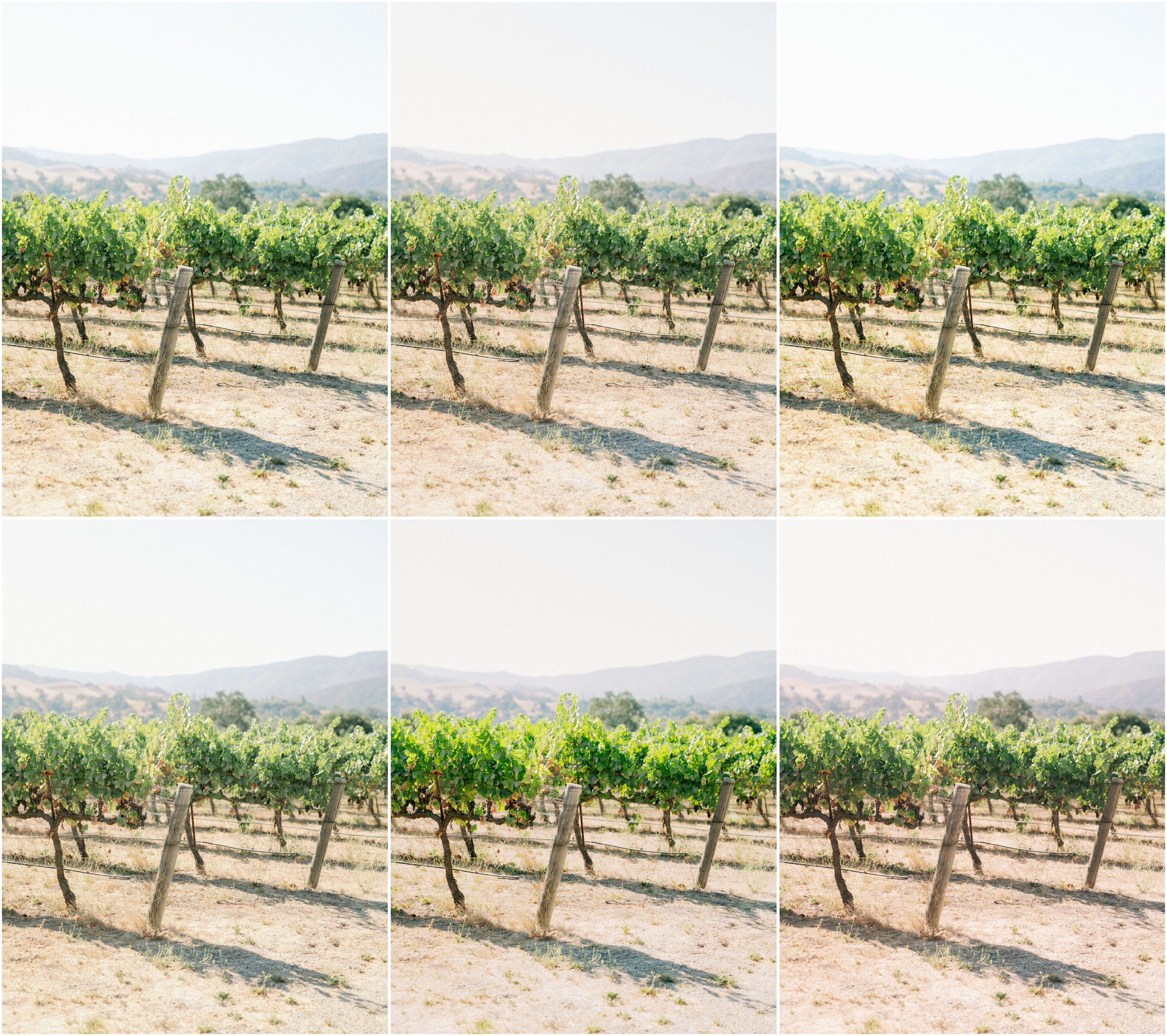 goodlight presets sunstone vines-1.jpg