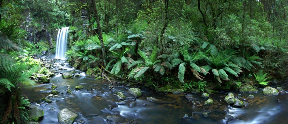 Great-Otway-National-Park-Great-Ocean-Road-Victoria-Australia.jpg