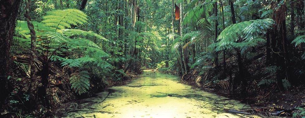 Rainforest-Fraser-Island.jpg