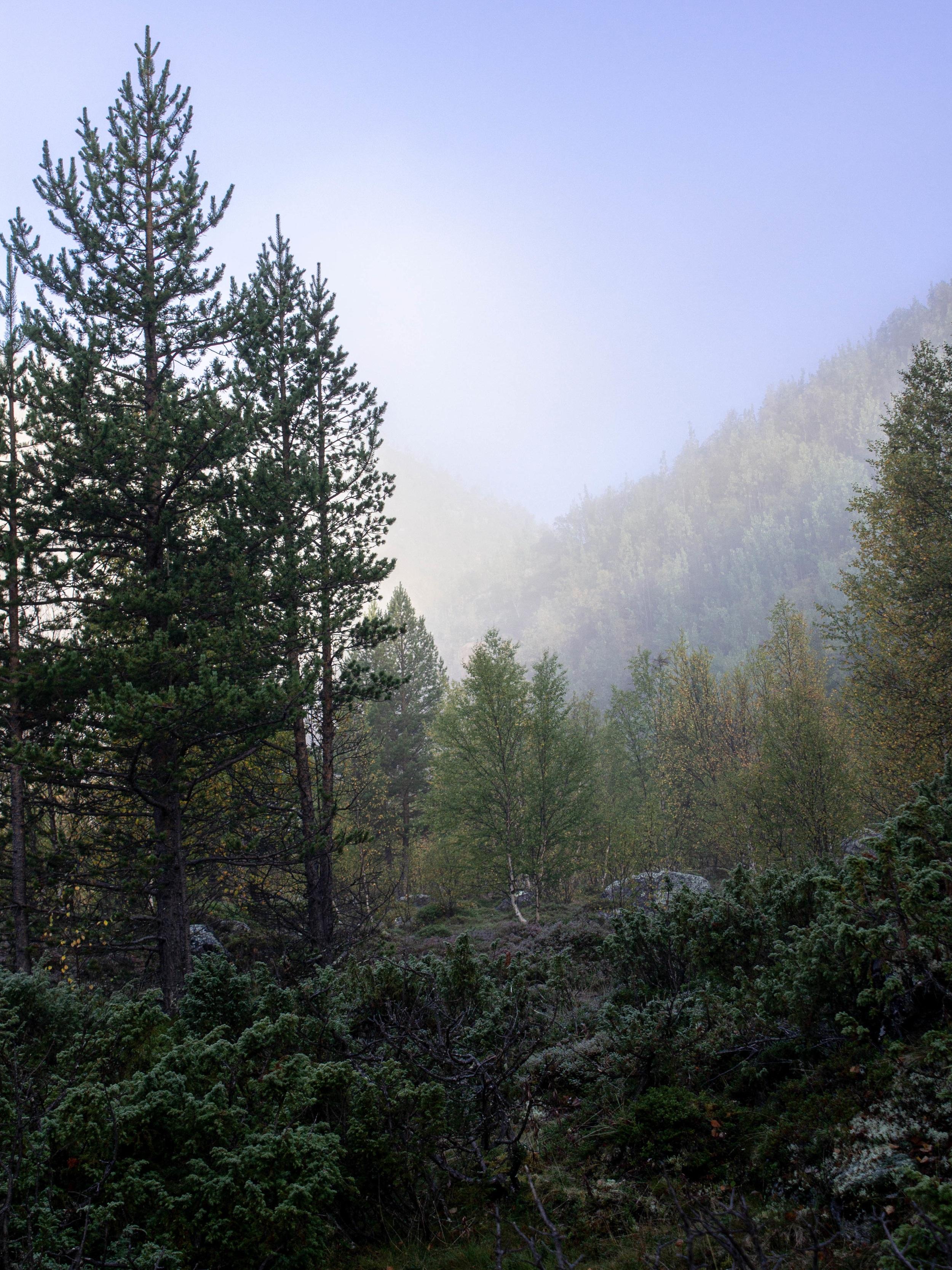 Aamu-usvaa Fiellun putouksen telttapaikalla kolmannen vaelluspäivän aamuna.