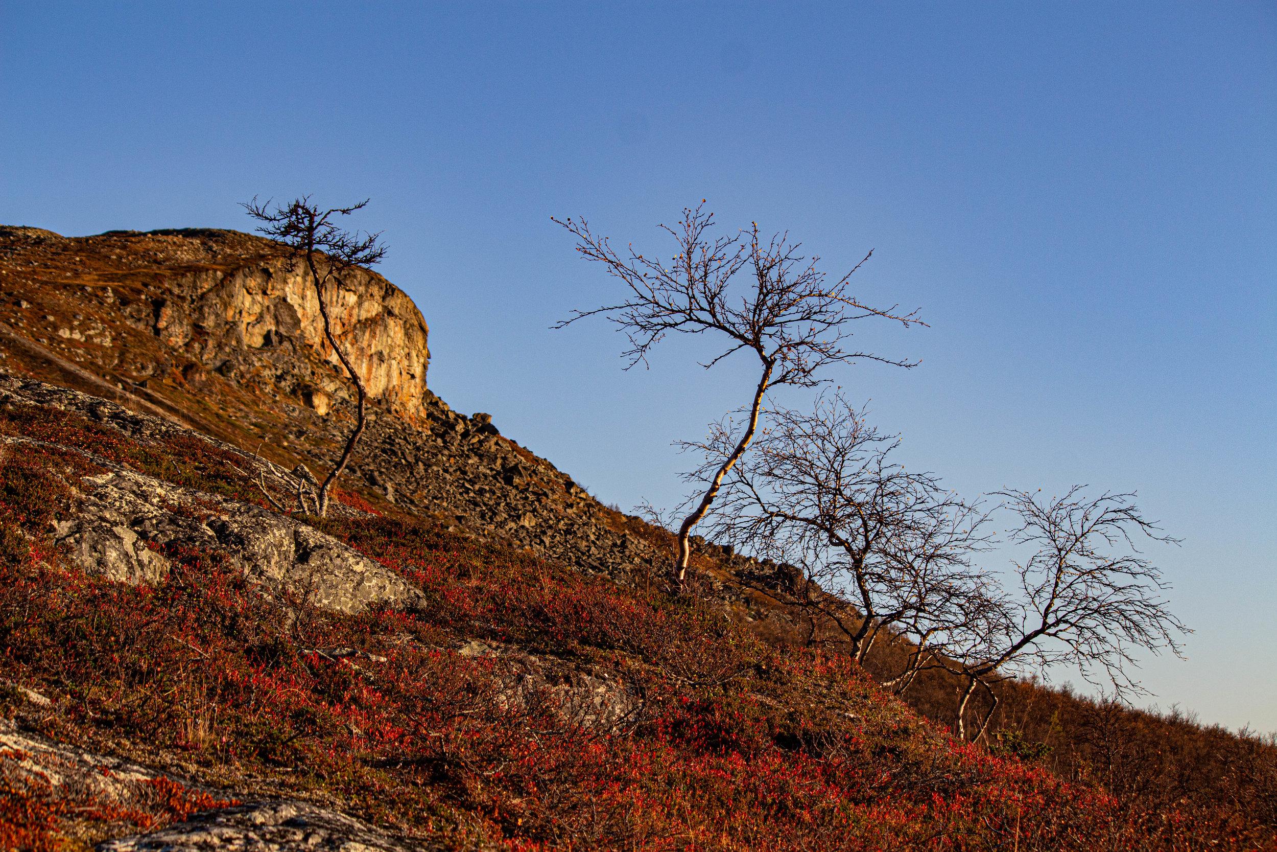 Syyskuun puolessavälissä ruskan värit tummenivat. Taustalla loistava  Saanatunturi  on minulta vielä huiputtamatta.